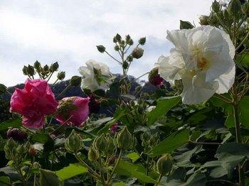 22花.jpg