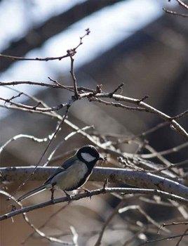小鳥.jpg