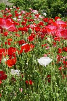赤い花.jpg