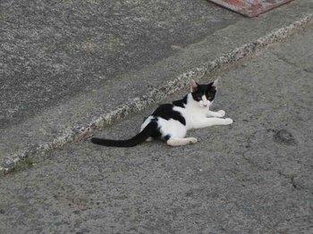 野良子猫.jpg