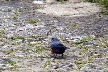 首里城小鳥.jpg